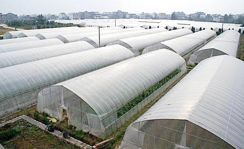 蔬菜大棚专业膜